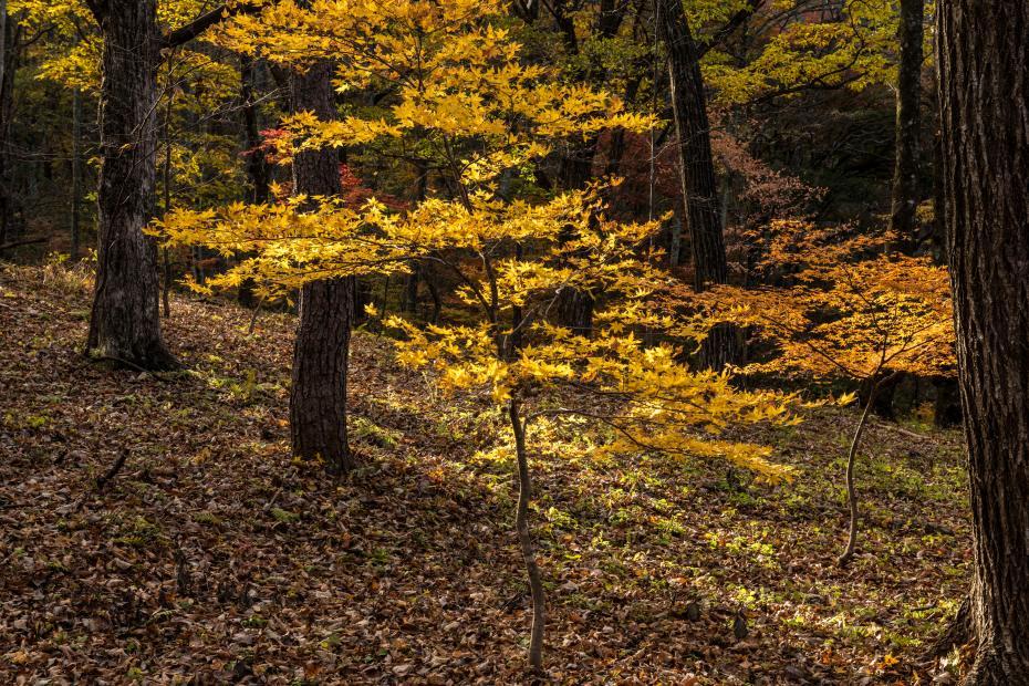 2015.10.31榛名湖を周回散策8