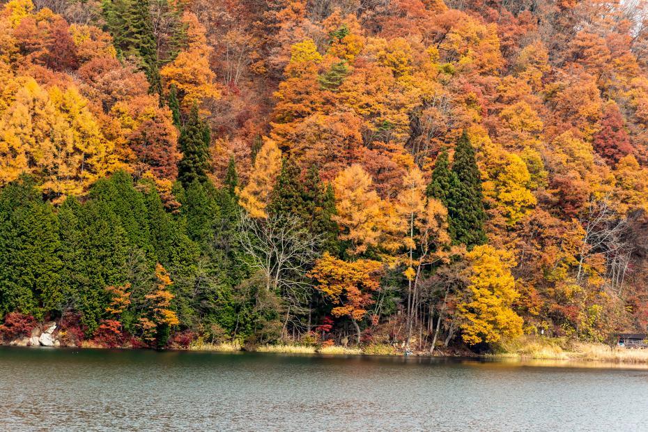 2015.11.07中綱湖3