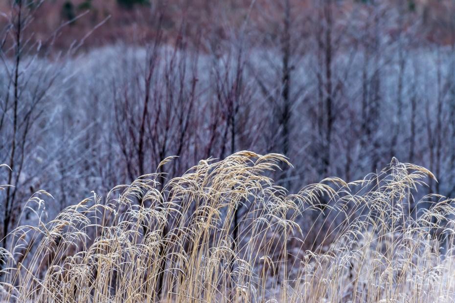 2015.11.12上高地の大正池と周辺9