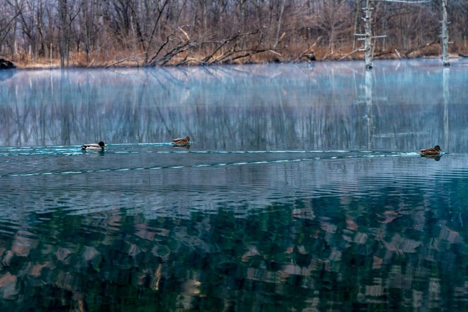 2015.11.12上高地の大正池と周辺4