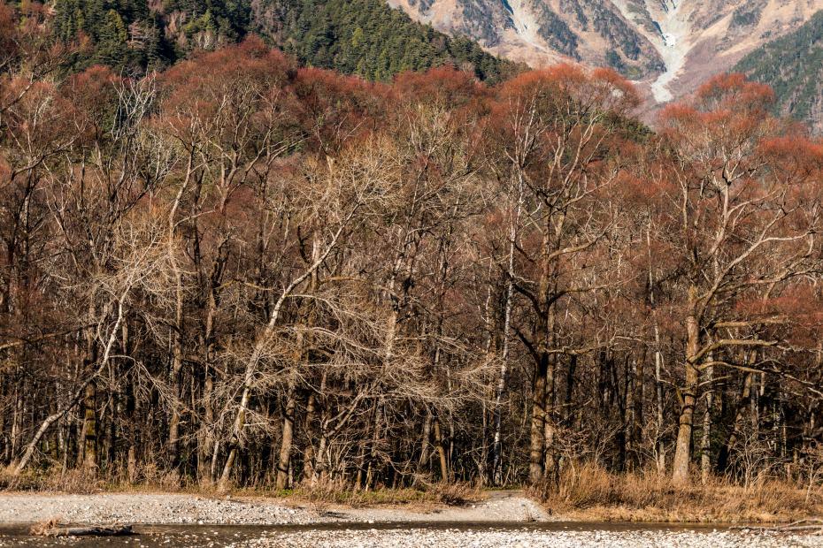 2015.11.12河童橋から大正池へ9
