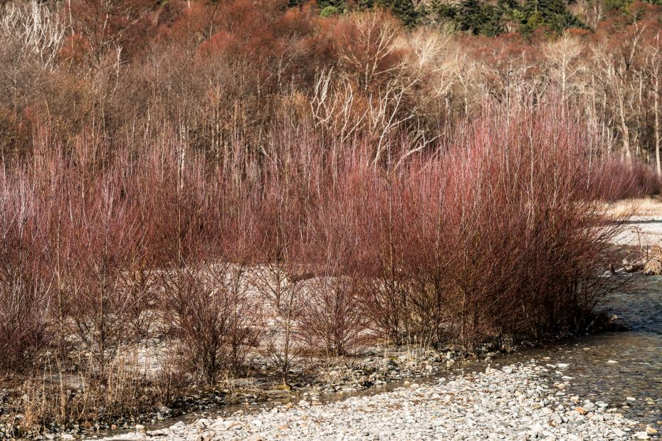 2015.11.12河童橋から大正池へ7