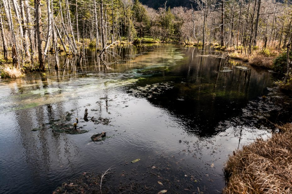 2015.11.12河童橋から大正池へ3