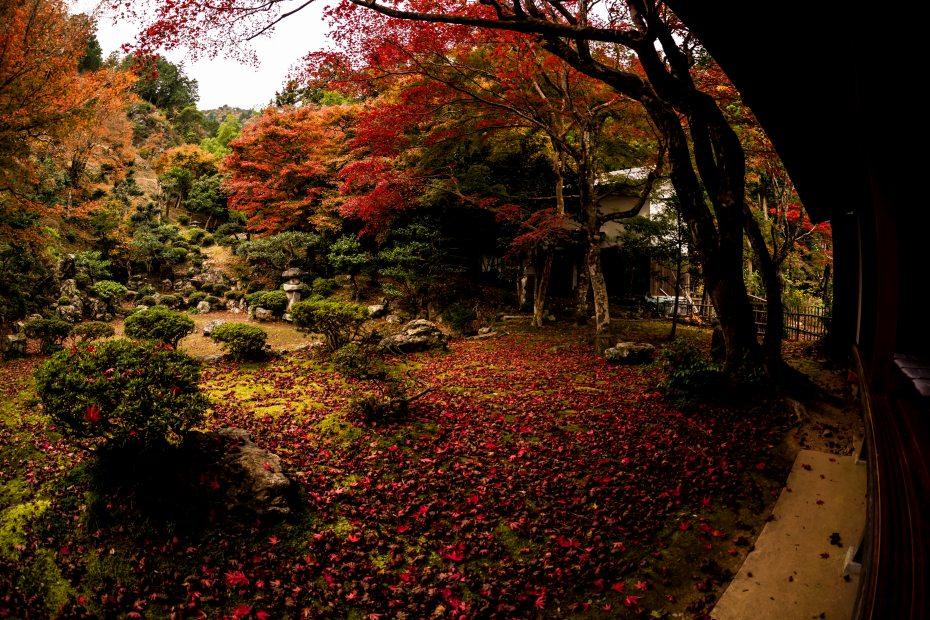 2015.11.17徳源院の紅葉7