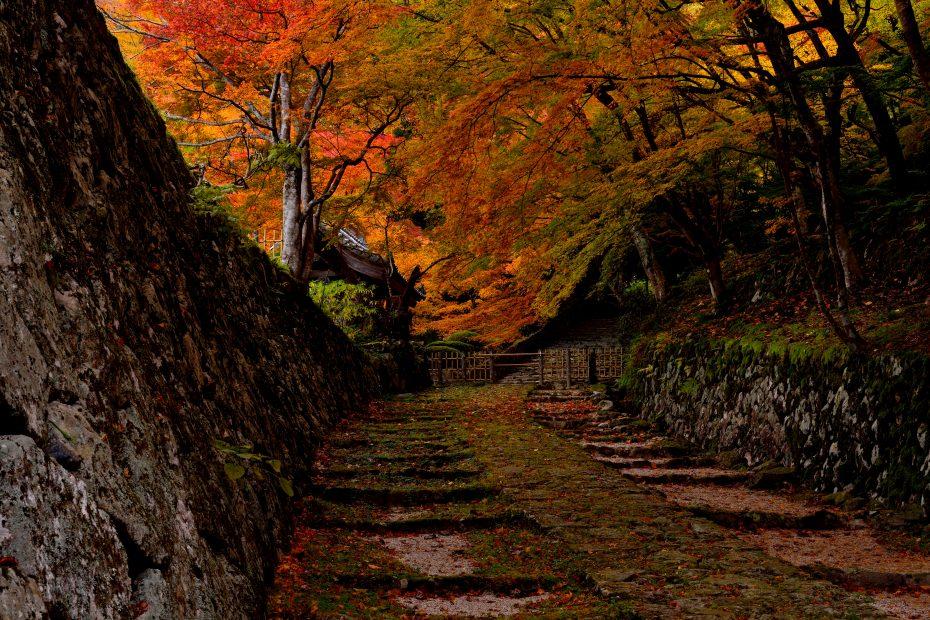 2015.11.18百済寺2(2013.11.22)