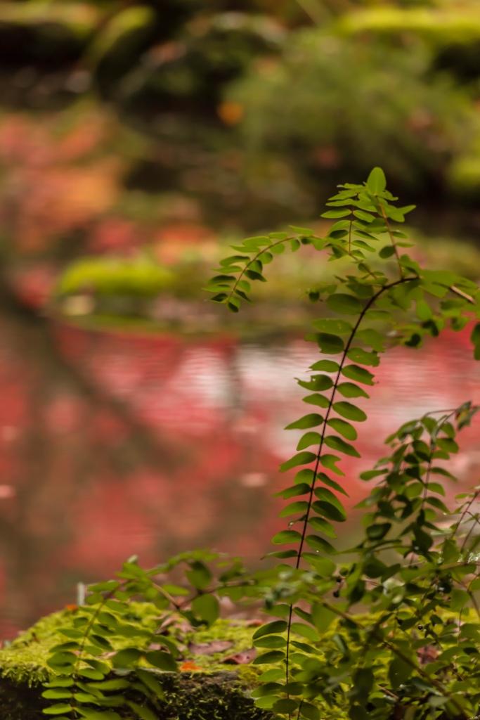 2015.11.19金剛輪寺の庭園14