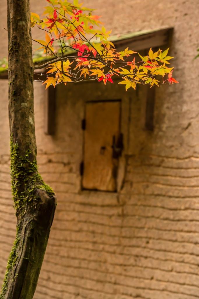 2015.11.19金剛輪寺の庭園12