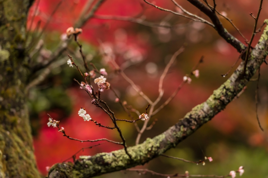 2015.11.19金剛輪寺の庭園11