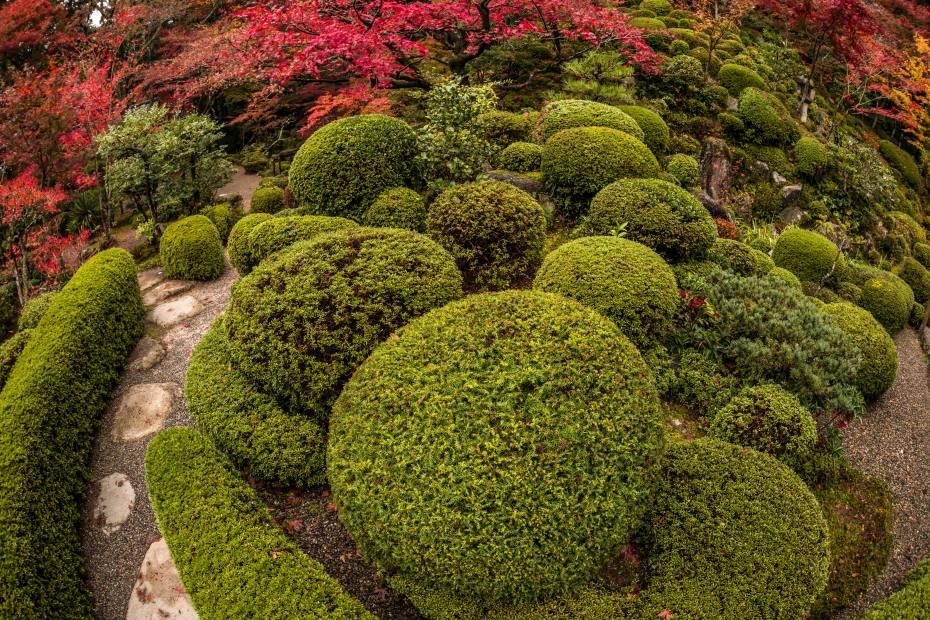 2015.11.19金剛輪寺の庭園9