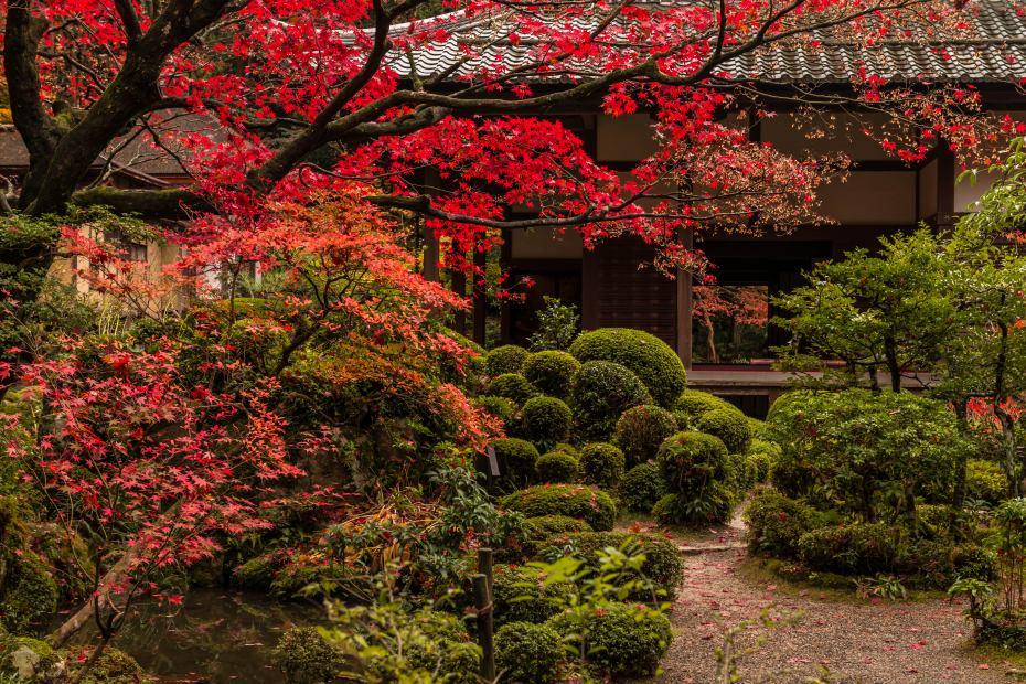 2015.11.19金剛輪寺の庭園7