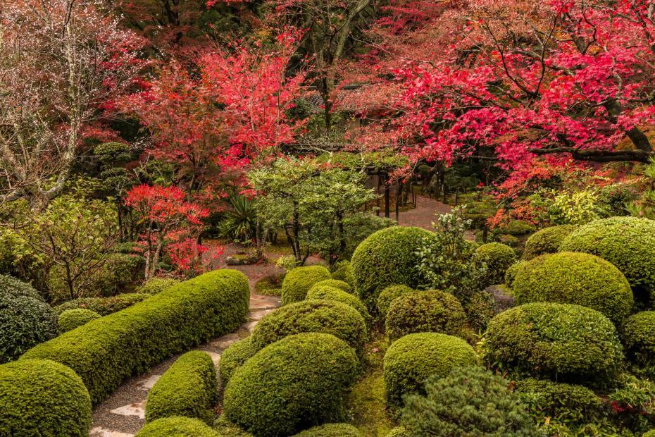 2015.11.19金剛輪寺の庭園6