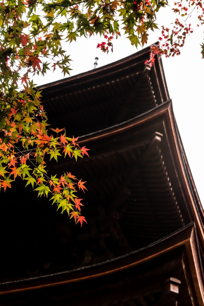 2015.11.19金剛輪寺_本堂へ8