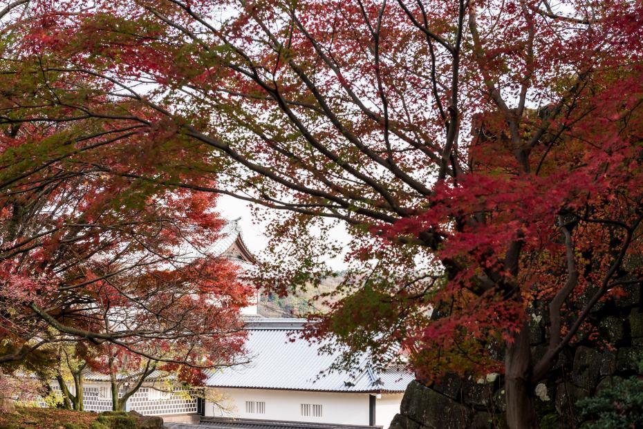 2015.11.29金沢城公園3
