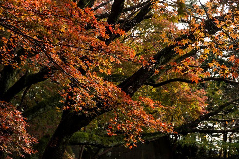 2015.11.29金沢城公園4