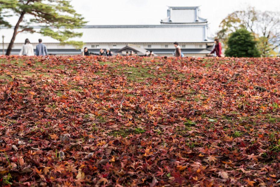 2015.11.29金沢城公園2