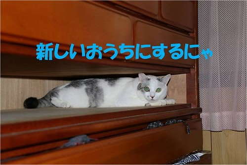 s-151013-4.jpg