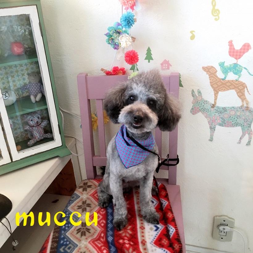 muccu 三宅
