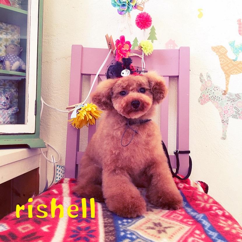 rishell 川崎