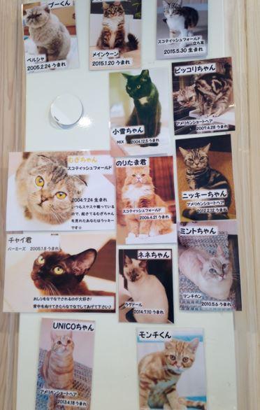 猫の時間1