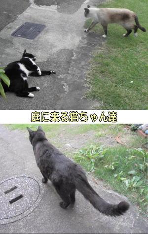 庭猫と遭遇