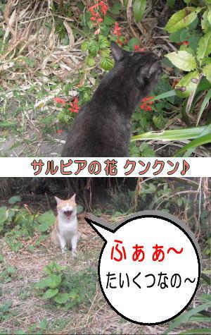 茶トラ白猫と遭遇