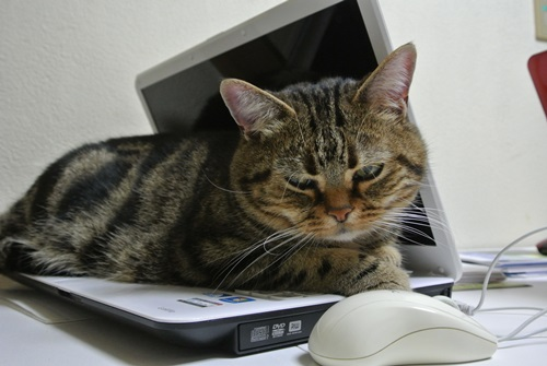 パソコン寝こてつ