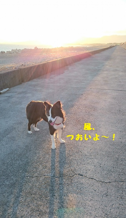 s-_20151017_184709.jpg