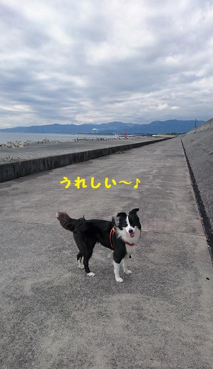 s-_20151111_154206.jpg