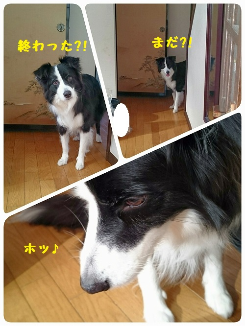 s-_20151209_131858.jpg