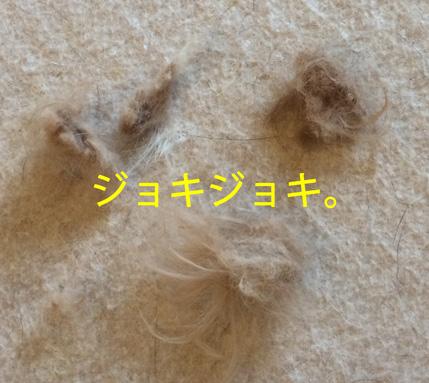 20151114- 20151108 (8)