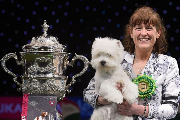 crufts-winner-2016.jpg