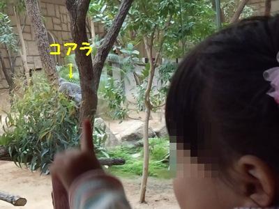 20151113動物園④