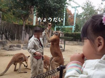 20151113動物園⑨