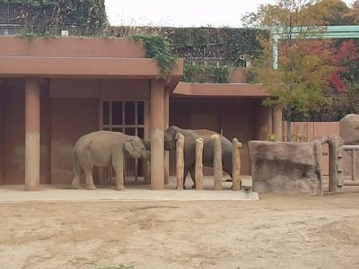 20151113動物園⑪