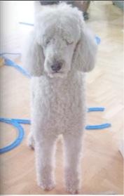 dogwash10.jpg