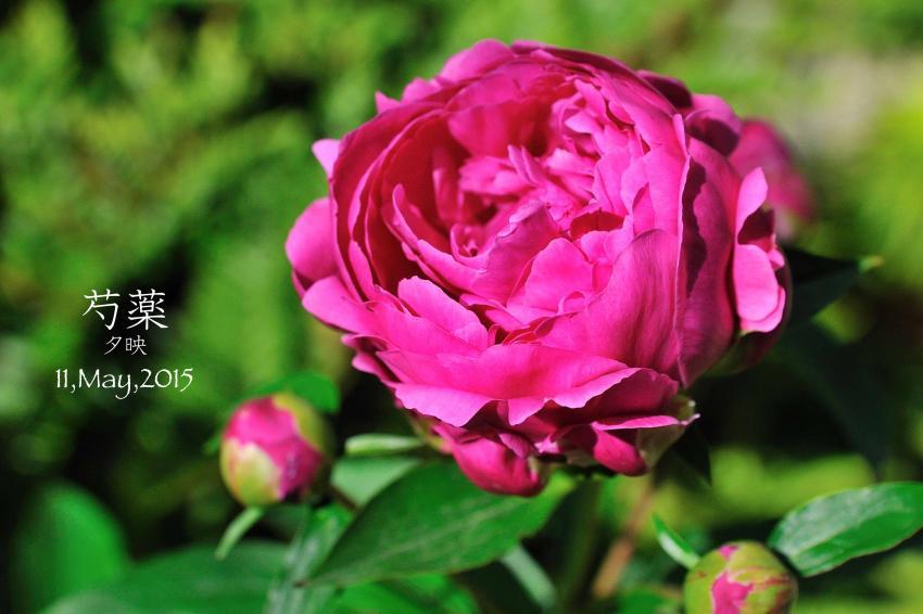 DSC_0943-L_convert_20150909153421.jpg