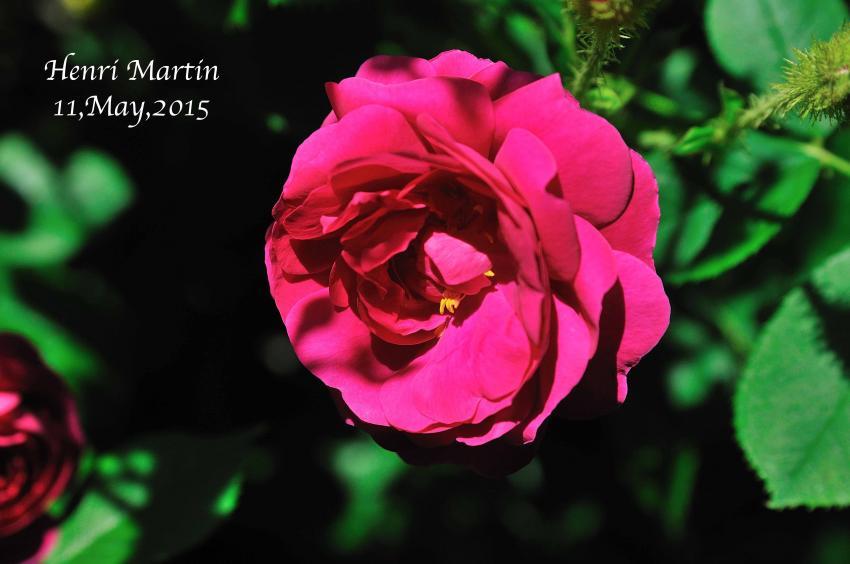 DSC_0967-L_convert_20150909152154.jpg