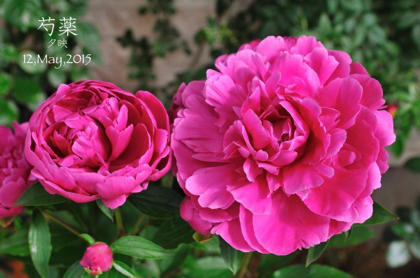 DSC_1037-L_convert_20150909155616.jpg