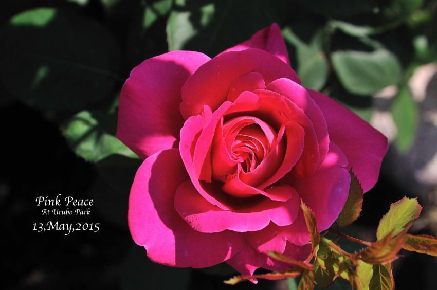 DSC_1301-L_convert_20150909170231.jpg