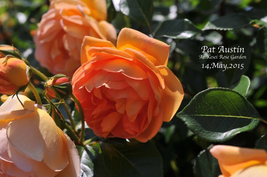 DSC_1581-L_convert_20150910125027.jpg
