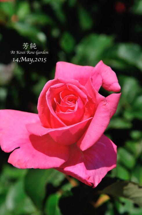 DSC_1602-L_convert_20150910132953.jpg