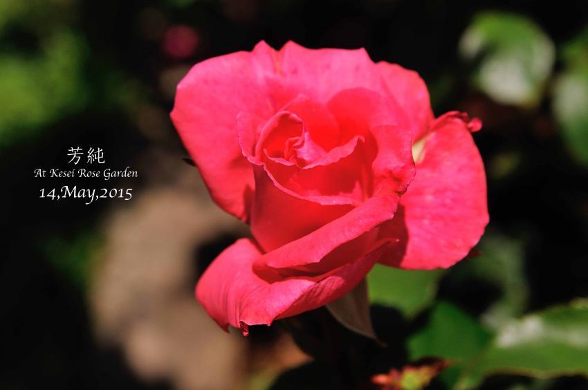 DSC_1603-L_convert_20150910133002.jpg
