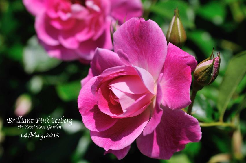 DSC_1616-L_convert_20150910131537.jpg