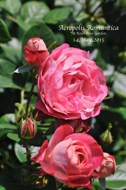 DSC_1692-L_convert_20150910125804.jpg