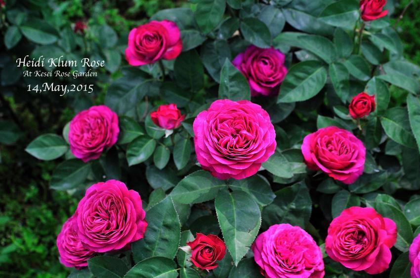 DSC_1815-L_convert_20150910132608.jpg