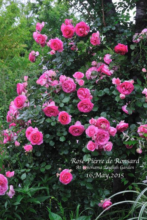 DSC_2583-L_convert_20150910144323.jpg