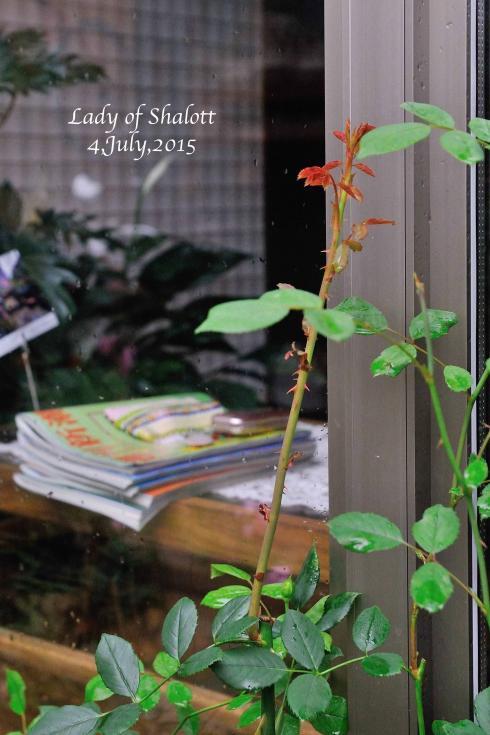 DSC_5719-L_convert_20151209072423.jpg