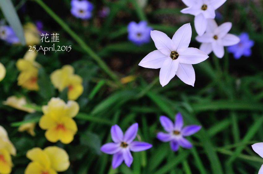 DSC_6305-L_convert_20150907220844.jpg
