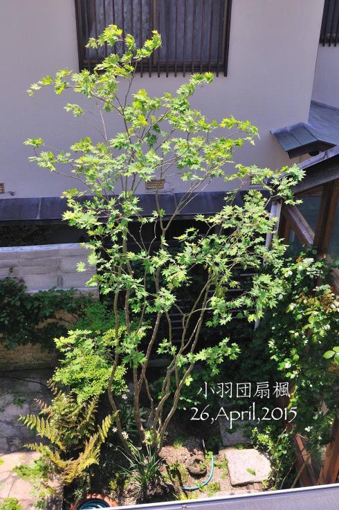 DSC_6474-L_convert_20151110074713.jpg