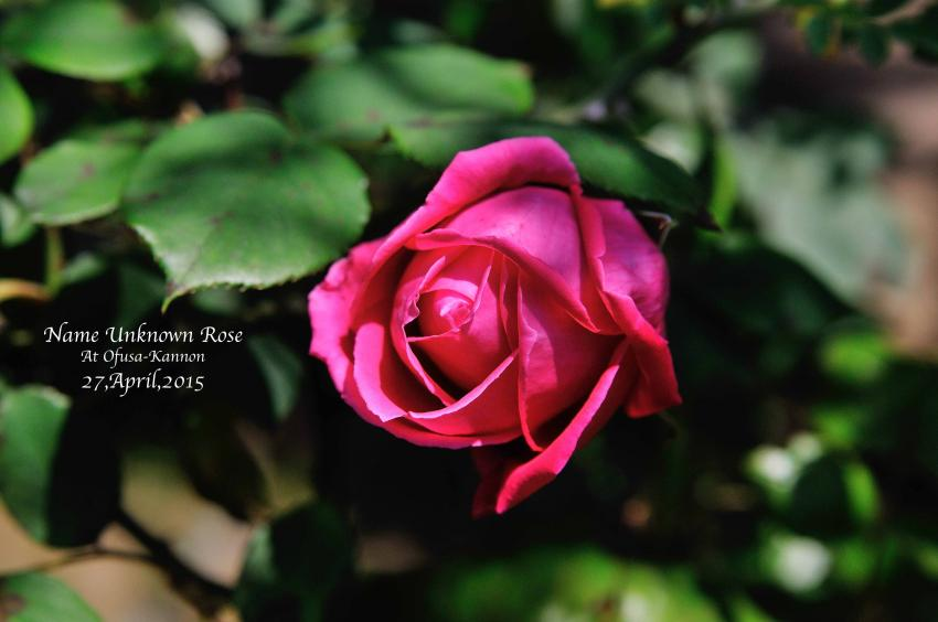 DSC_6547-L_convert_20150908060836.jpg